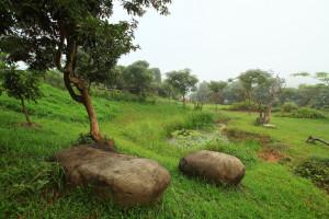 pond-garden